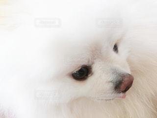 犬のクローズアップの写真・画像素材[3246816]