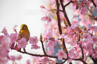 花の写真・画像素材[354429]