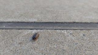地面に座っているダンゴムシの写真・画像素材[3198712]