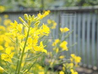花のクローズアップの写真・画像素材[4064639]