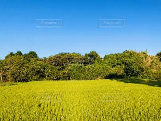 緑豊かな畑のクローズアップの写真・画像素材[3182381]