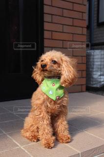 風になびく犬の写真・画像素材[3182068]
