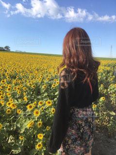 ひまわり畑の写真・画像素材[3197817]