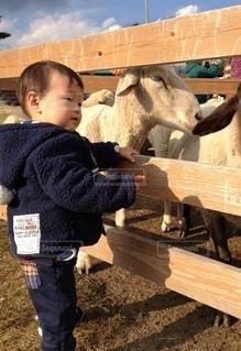 ひつじと男の子の写真・画像素材[3228708]