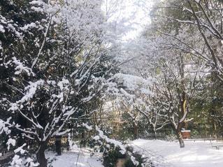 雪に覆われた木の写真・画像素材[3186064]