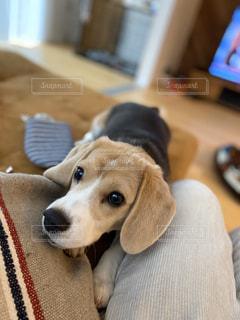 横になってカメラを見ている犬の写真・画像素材[3186900]