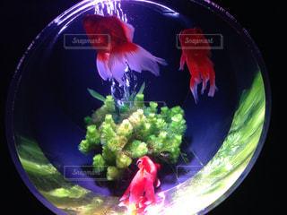 魚の写真・画像素材[128668]