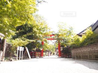 神社の鳥居と緑の写真・画像素材[3193984]