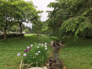 お花畑の写真・画像素材[128767]