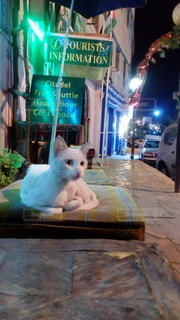 ヨルダンの街と猫の写真・画像素材[3190576]