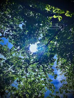 森の中の木の写真・画像素材[3209708]