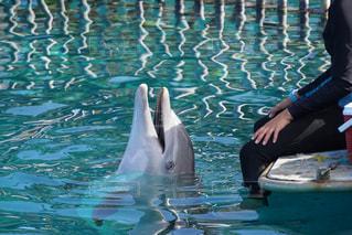 水の下で泳ぐ魚を持っているイルカの写真・画像素材[3207260]