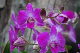 花のクローズアップの写真・画像素材[3213468]
