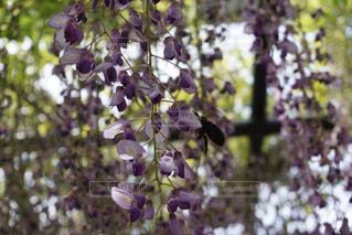 花のクローズアップの写真・画像素材[3220094]