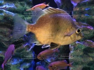 水の中の魚のグループの写真・画像素材[3396151]
