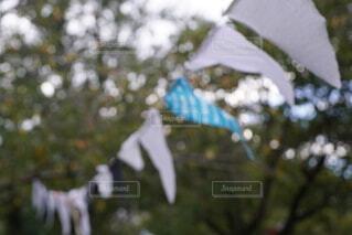 木のクローズアップの写真・画像素材[3698813]