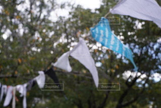 旗のクローズアップの写真・画像素材[3698814]