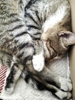 寝てる猫の写真・画像素材[3287538]