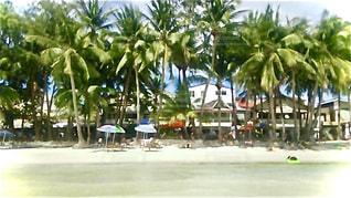 ヤシの木とビーチの写真・画像素材[3287549]