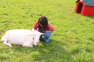 草の中に座っているヤギと私の写真・画像素材[3197021]