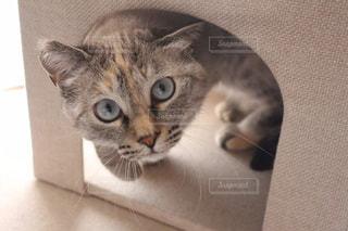 カメラ目線な猫の写真・画像素材[3198140]
