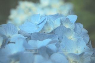 花の写真・画像素材[146874]