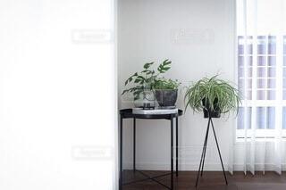 観葉植物の写真・画像素材[3827761]