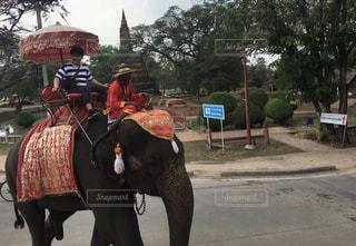 象に乗って散歩の写真・画像素材[3207311]