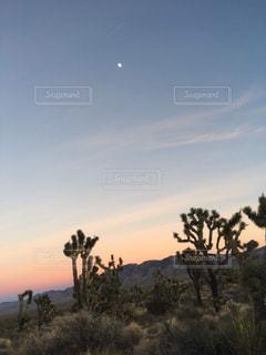ジョシュアツリー公園の夕焼けの写真・画像素材[3207332]