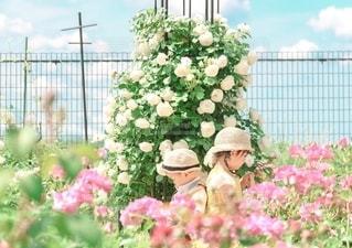 バラの中の姉弟の写真・画像素材[3238993]