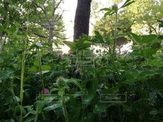 花園のクローズアップの写真・画像素材[3212957]