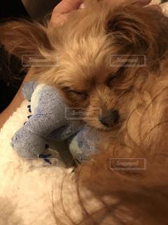 ベッドに横たわっている犬の写真・画像素材[3584174]