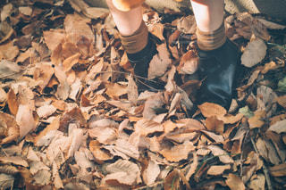 落ち葉と足元の写真・画像素材[3206354]