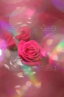 花のクローズアップの写真・画像素材[3203728]