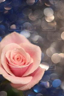 花のクローズアップの写真・画像素材[3203731]