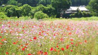 たくさんの花と新緑の写真・画像素材[3265455]