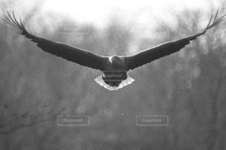空を飛んでいるオジロワシの写真・画像素材[3202245]