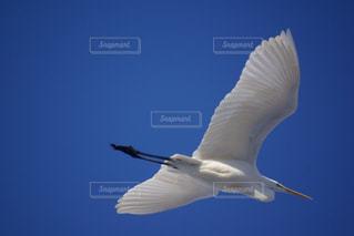 空を飛んでいるサギの写真・画像素材[3202255]
