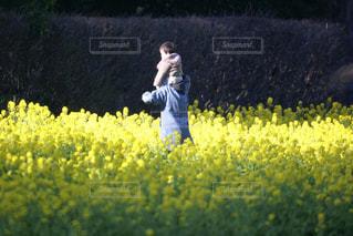 菜の花畑を散歩する親子の写真・画像素材[3202393]