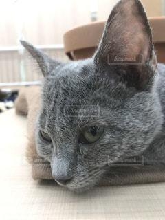 猫のクローズアップの写真・画像素材[3205140]