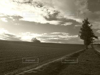 モノクロの美瑛の丘の写真・画像素材[3208178]