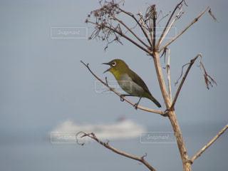 木の枝に止まっている小鳥の写真・画像素材[3208184]