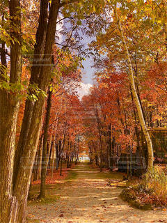 秋の樹の写真・画像素材[3228811]