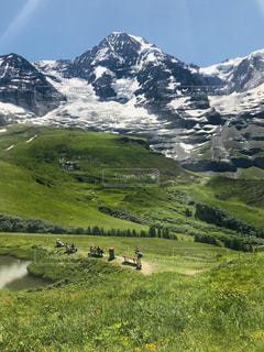 緑豊かな畑で放牧する牛の群れの写真・画像素材[3203274]