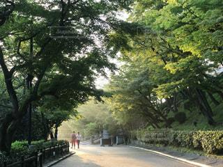 清水寺の写真・画像素材[670484]