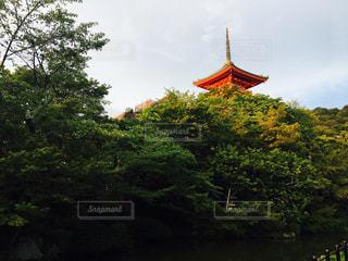 清水寺の写真・画像素材[670503]