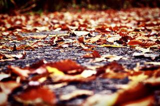 落ち葉の写真・画像素材[3205329]