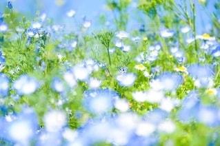 花のクローズアップの写真・画像素材[3211819]
