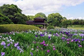 紫色の花が庭にあるの写真・画像素材[3208620]