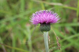 植物の上の紫色の花の写真・画像素材[3207556]